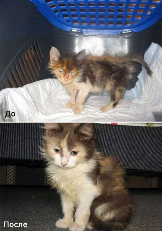 Бездомные кошки в добрых руках