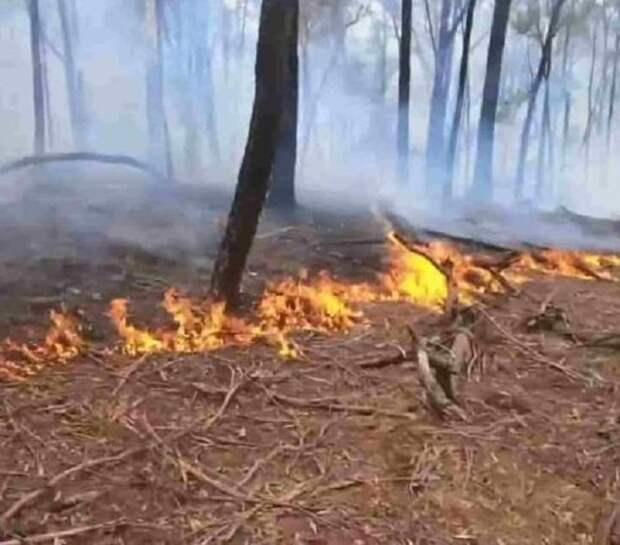 Молодой австралиец тушил пожар возле своего дома, когда внезапно заметил лежащего на земле кроху- кенгуру