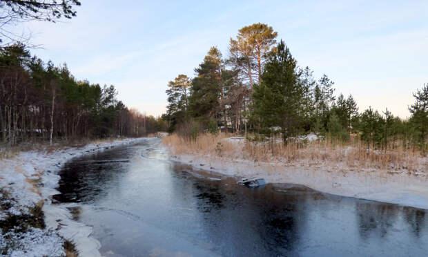 Эко-проекты двух лесных предприятий Архангельской области получат софинансирование