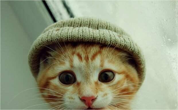 кошачье проявление любви (4)