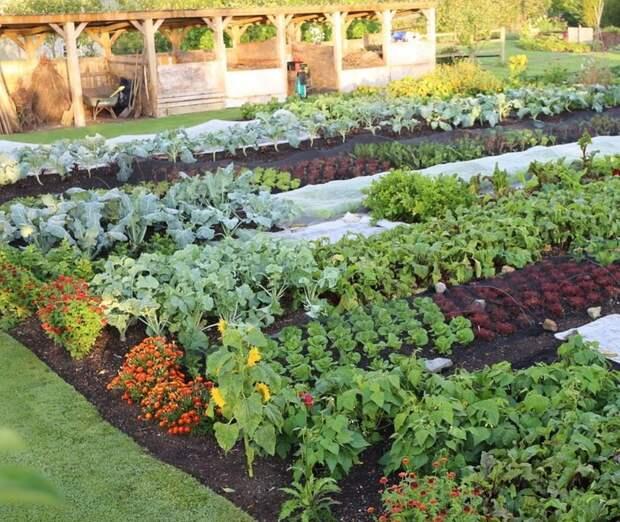 Пандемия вновь превратила британцев в «нацию огородников»