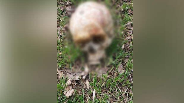 Человеческий череп нашла ростовчанка наЛевом берегу