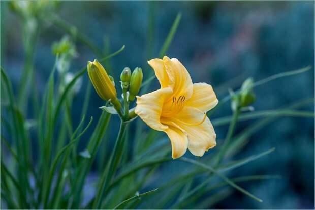 В каком состоянии цветники во дворе вашего дома? — новый опрос