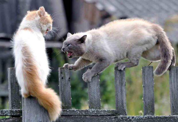 Дачные соседи-хейтеры. Как с такими жить рядом