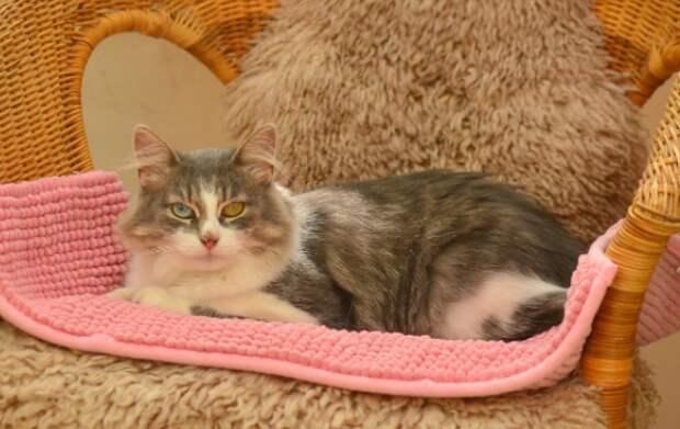 В Выхине-Жулебине ищут хозяев для ласковой разноглазой кошки