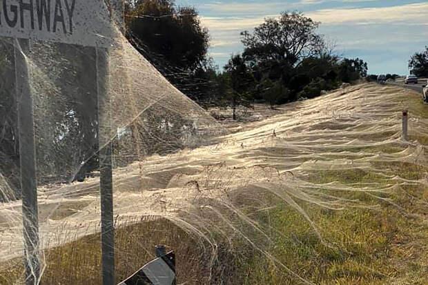 Австралийский город покрылся слоями паутины
