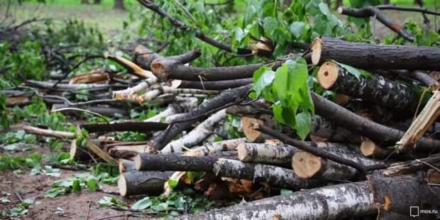 Сломанные ветки деревьев вывезли из двух микрорайонов в Куркине