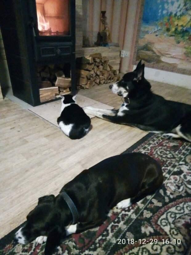 Черный пес бродил по трассе, не понимая, почему ему так больно большая собака, пес, приют, собака, трасса