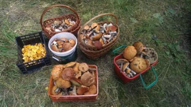 Почему за грибами ходят преимущественно рано утром