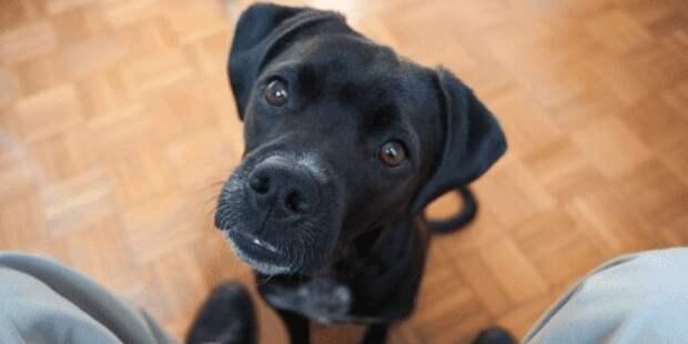 Пропала любимая собака. Долгожданный телефонный звонок раздался через год