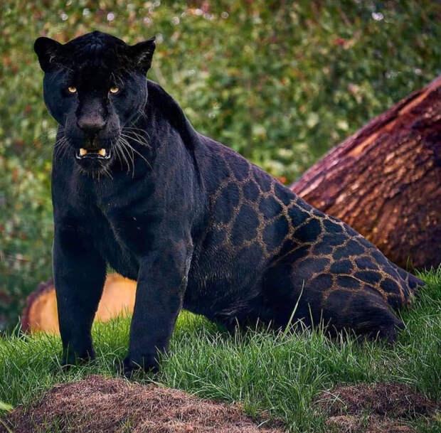 Несколько зверУшек, которых природа раскрасила на зависть