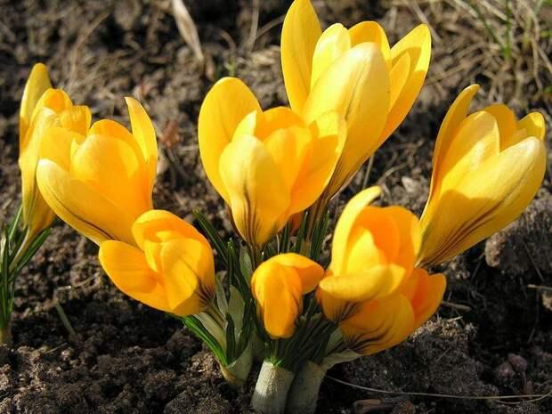 Первые цветы весны. Многообразие форм и красок освежит ваш сад