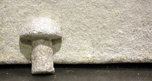 дома-из-грибов