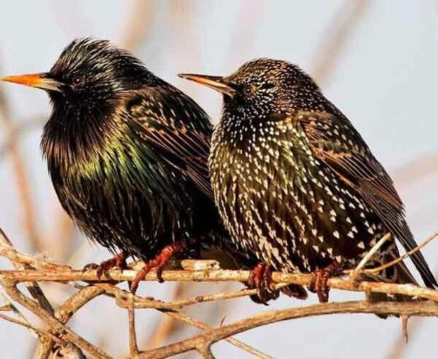 Источник фото: bookmagazineblog.wordpress.com