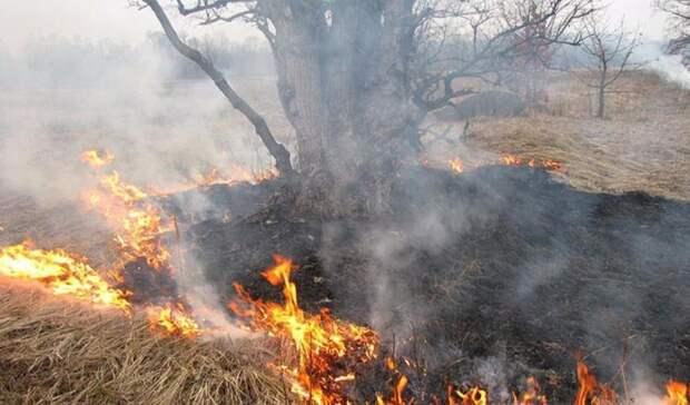 ВОренбуржье в17 муниципалитетах объявили 4 класс пожарной опасности