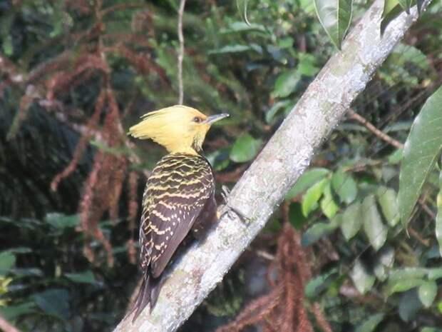 Птички: фотографии, которые вам понравятся!