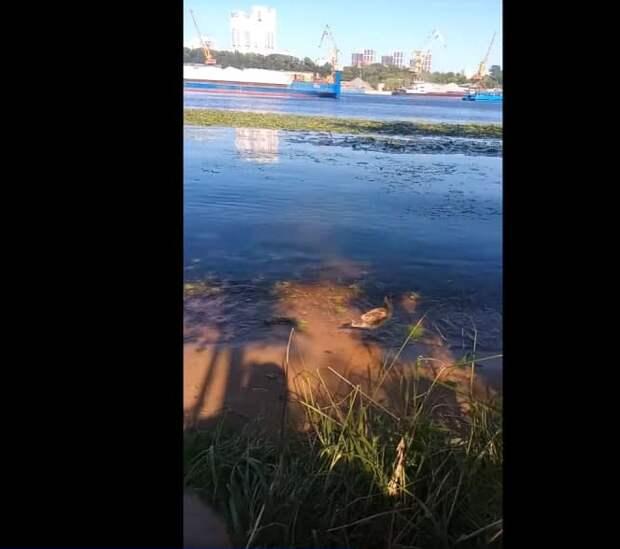 Патрульная чайка на набережной в Северном Тушине стала звездой социальной сети