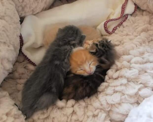 Малюсенькие котята даже не успели открыть глазки, а уже лишились мамы