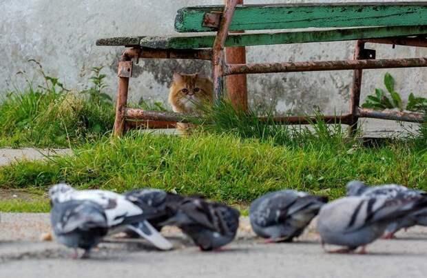 Неудачная охота кота Рыжика