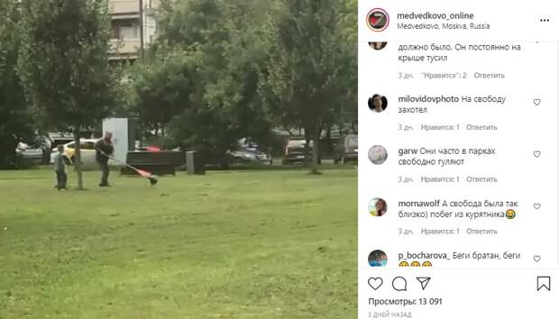 Сбежавшего из вольера павлина поймали в сквере по Олонецкому проезду