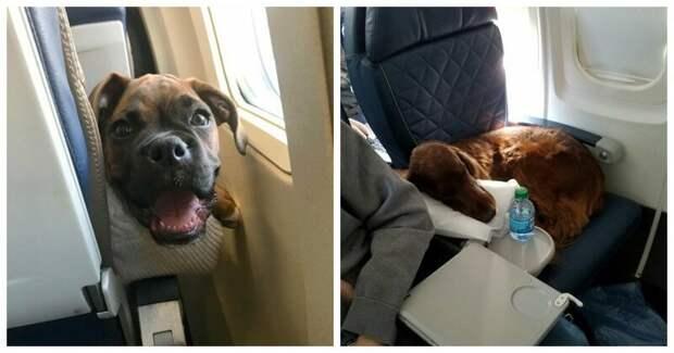 22 причины, почему собак нельзя пускать в самолет животные, пассажир, салон, самолет, собака, фотография