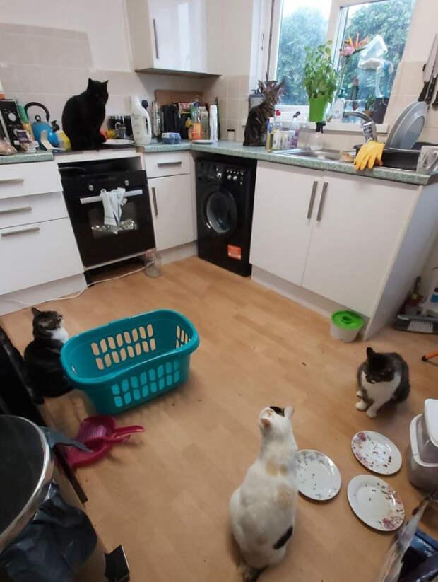 Фото кошек, которые пробираются в дома и остаются жить навсегда