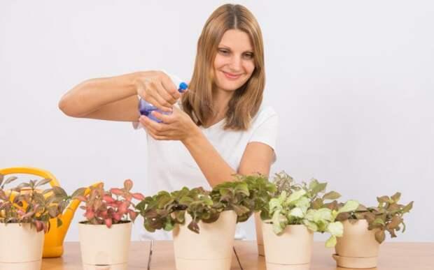 Опрыскивание комнатных растений