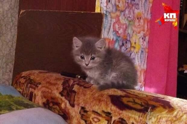 8-летний Дима Кожевников рискуя своей жизнью спасал котенка из горящего дома