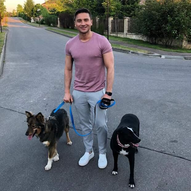 """Сергей Лазарев: """"Если вы хотите завести собаку - НЕ покупайте, а возьмите из приюта!"""""""