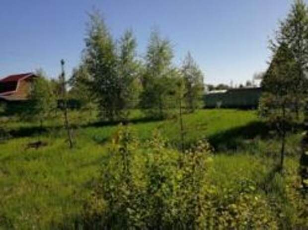 Деревня или садовое товарищество: где купить дачу