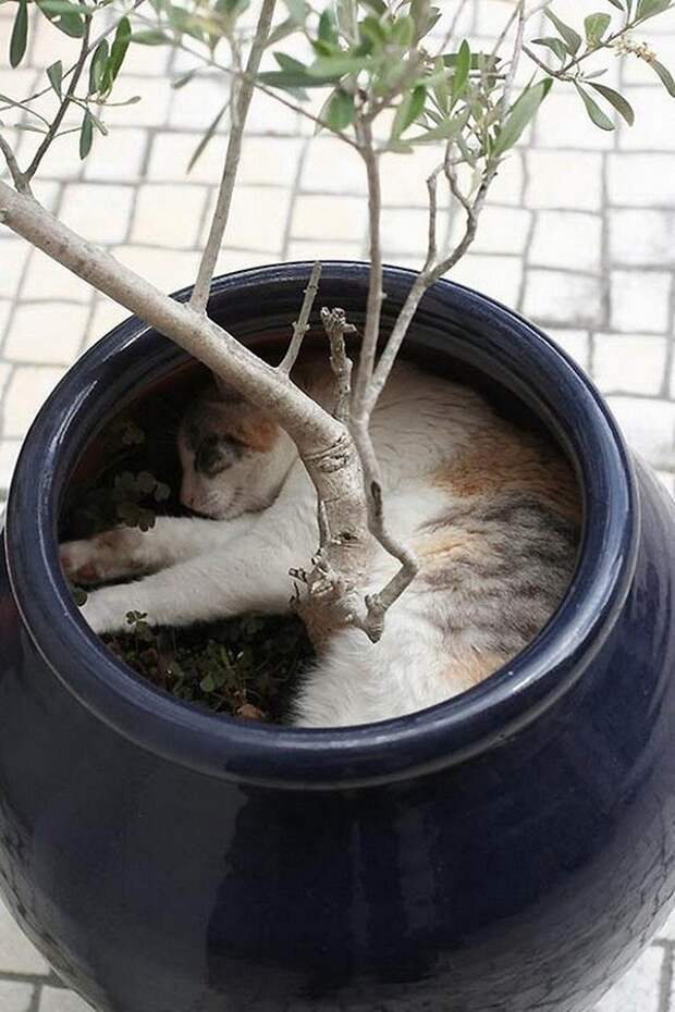 Коты спят
