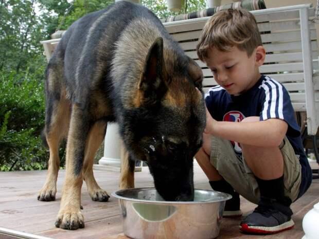 Почему наличие домашнего животного полезно для вас и вашей семьи