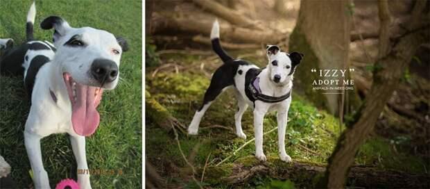 1. Иззи животные, помощь, портрет, приют, собака, фотограф, хозяин