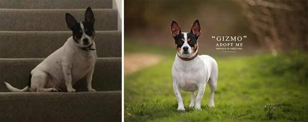 18. Гизмо животные, помощь, портрет, приют, собака, фотограф, хозяин