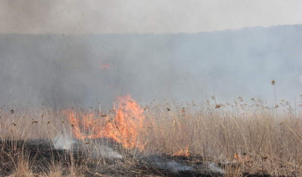В МЧС Оренбуржья предупредили об опасности поджога мусора