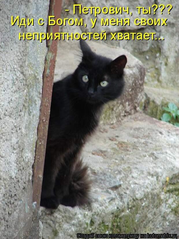 Котоматрица: - Петрович, ты??? Иди с Богом, у меня своих неприятностей хватает...