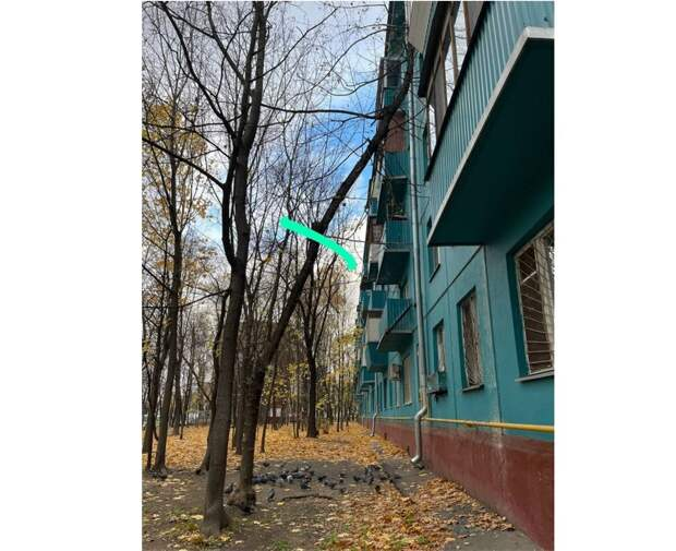 Ветку с «тремором»  у дома на Юных Ленинцев спилят до ноября