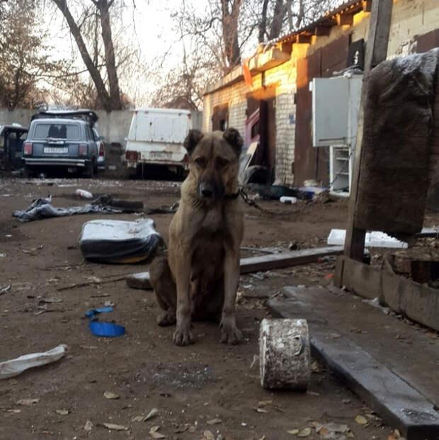 Брошенная собака несколько недель боролась за свою жизнь, сидя на короткой цепи у гаражей
