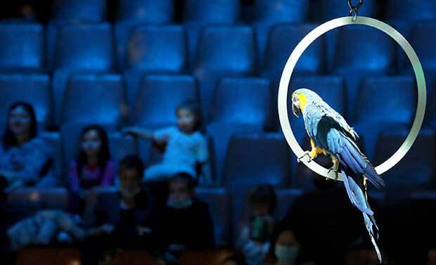 Художники против цирков. Есть ли место современному искусству там, где эксплуатируют животных