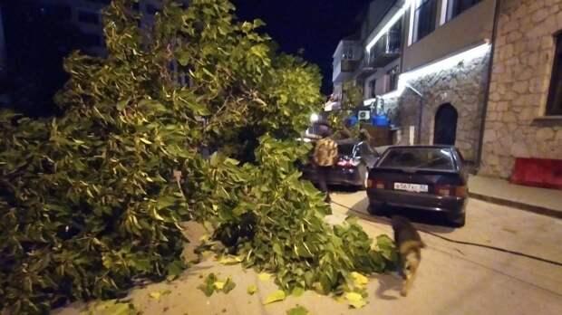 Ночью в Ялте на припаркованные автомобили рухнуло дерево. Фото