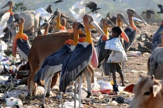 5. Гигантский марабу вид, вымысел, гигант, животные, мир, правда, природа, фото