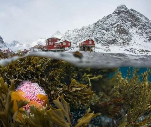 Sergey Lukankin / National Geographic