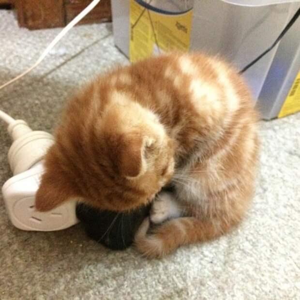 Котенок с непонятной аномалией роста получил второй шанс и любящую семью