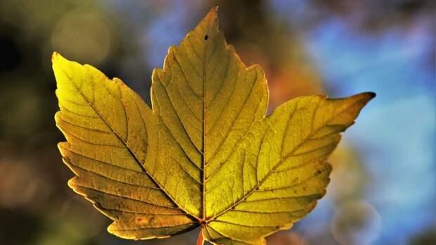 Названы календарные сезоны, которые влияют на организм человека