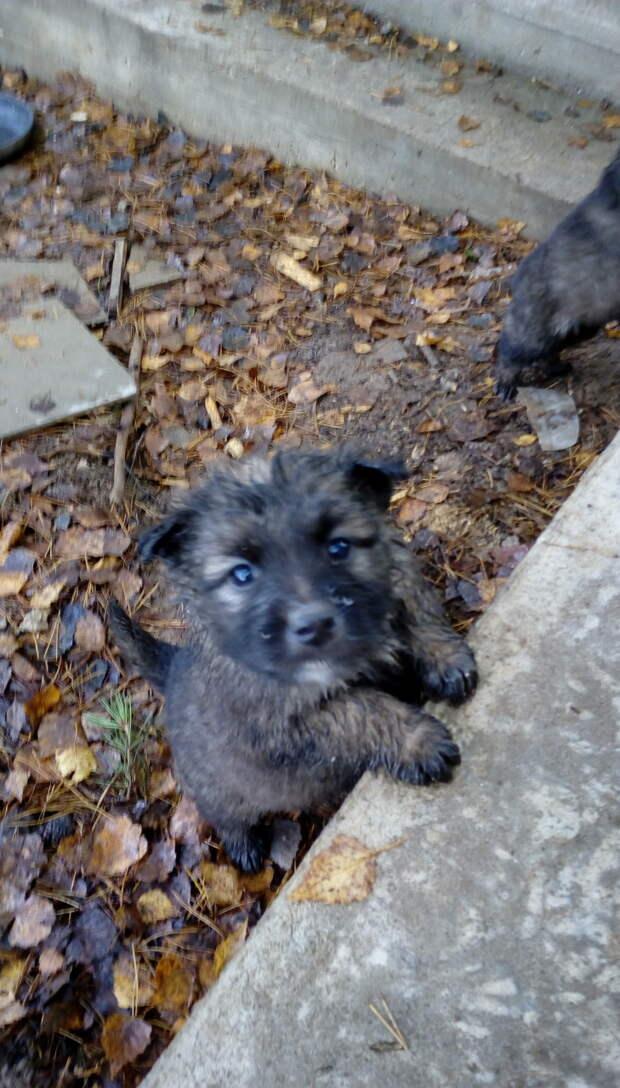 Десять маленьких щенков в Тульской области без шансов выжить