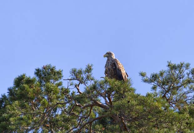 Орланы и змеи Волжско-Камского заповедника