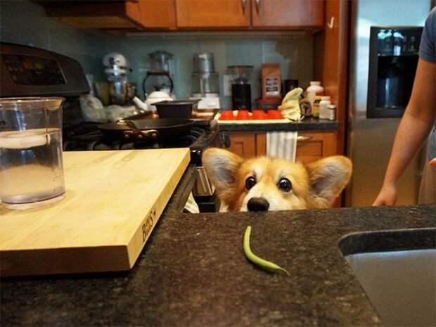 Собака-доставака (4 фото)
