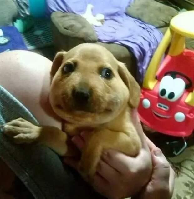 Несколько забавных снимков с собаками
