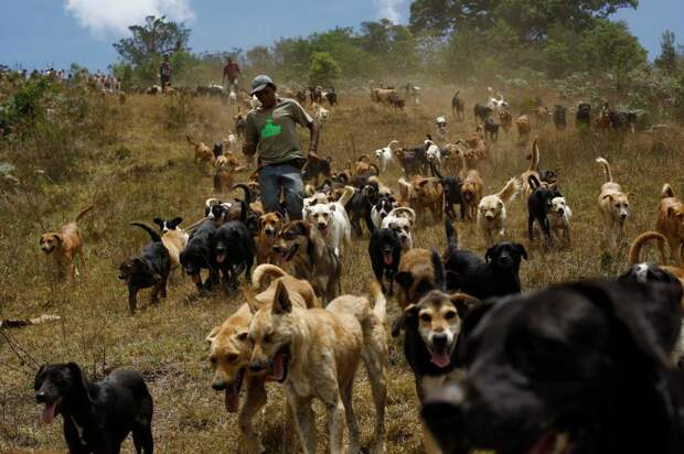 The Wider Image: Land of the Strays