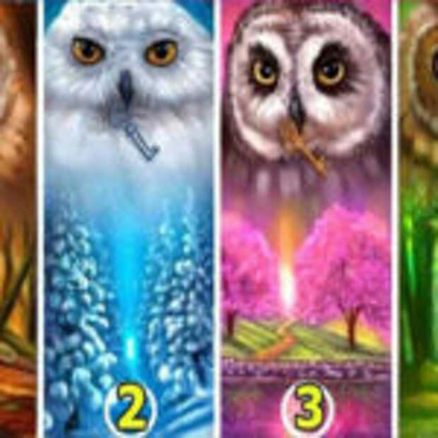 Тест: Выберите одну сову из четырёх, и узнайте как к вам относятся окружающие люди.